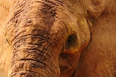 Free Elephant Closeup Stock Photography - 16731922