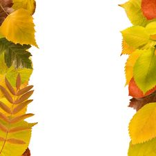 Free Two Columns Of Different Fall Leaves Royalty Free Stock Images - 16733129