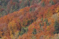 Autumn In Switzerland Stock Image