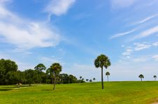 Free Palm Trees On The Green Field Stock Images - 16735784