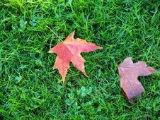 Free Leafs On A Grass. Royalty Free Stock Image - 16739386