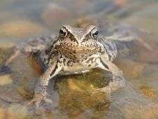 Free Toad Stock Images - 16739724