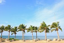 Free Tropical Coconut Trees Royalty Free Stock Photography - 16739737