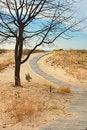 Free Boardwalk To Beach Royalty Free Stock Photo - 16741985
