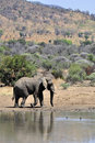 Free African Elephant. Royalty Free Stock Photography - 16742027