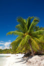 Free Palm On Caribbean Sea Royalty Free Stock Photo - 16744305