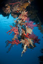 Free Vibrant Tropical Coral Reef Scene. Royalty Free Stock Image - 16749666