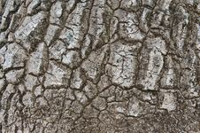 Bark Of Nolina Recurvata From Mexico Royalty Free Stock Photo