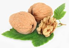 Free Walnut Stock Photography - 16740372