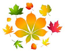 Free Background With Autumnal Leaves. Royalty Free Stock Photography - 16740737