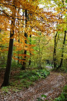 Free Autumn Forest Path Stock Photography - 16740742