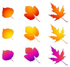Free Autumnal Leaves. Royalty Free Stock Image - 16740756
