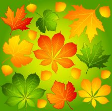 Free Autumnal Leaves. Stock Photos - 16740773