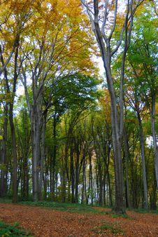 Autumn Forest Path Stock Photos