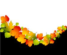 Free Autumnal Leaves. Royalty Free Stock Image - 16740906
