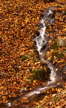 Forest Brook In Autumn Stock Image