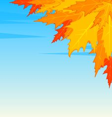 Free Autumnal Leaves. Royalty Free Stock Images - 16741049