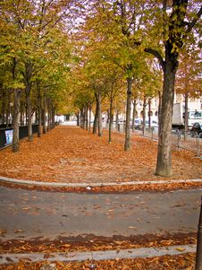 Free Trees And Leaves In Autumn Royalty Free Stock Image - 16741596