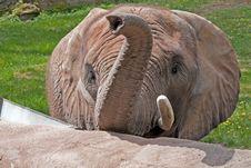 Free An Elephant Royalty Free Stock Photo - 16741745