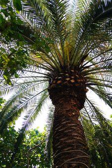 Free Coconut Tree Stock Photography - 16742452