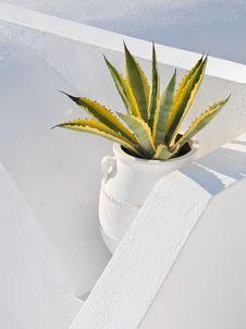 Free Cactus Plant Stock Photo - 16743060