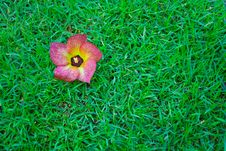Free Flower On The  Turf Royalty Free Stock Photography - 16743387