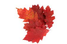 Free Autumnal Leaves On A White. Royalty Free Stock Image - 16744026