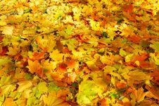 Free Wonderful Carpet Of  Autumn Foliage. Royalty Free Stock Image - 16744076