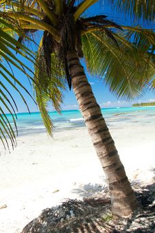 Free Beautiful Palm On Caribbean Sea Royalty Free Stock Photos - 16744288