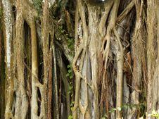 Free Tropical Nature Stock Photos - 16745383