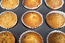 Free Muffins Stock Photography - 16745752