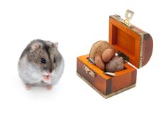 Free Dwarf Hamster Royalty Free Stock Photo - 16746645