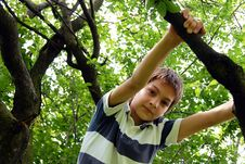Free Boy On Tree Stock Photo - 16746850