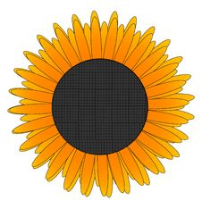Free Yellow Sunflower Stock Images - 16747454
