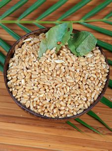 Free Hybrid Wheat Seeds Royalty Free Stock Image - 16748156