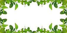 Free Green Leaves Frame Royalty Free Stock Images - 16748529