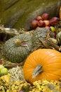 Free Pumpkin Patch Stock Photo - 16750110