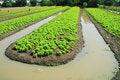 Free Vegetable Garden Stock Image - 16754601