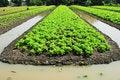 Free Vegetable Garden Stock Photography - 16754662