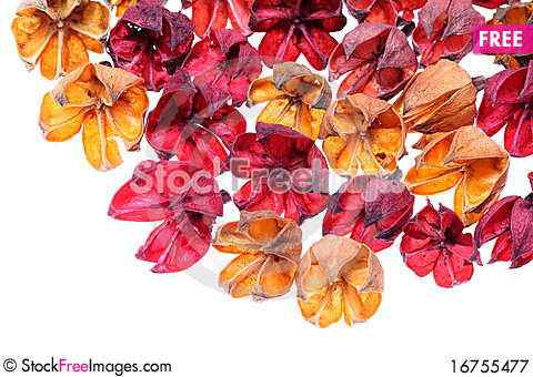 Free Wilted Plant Royalty Free Stock Photography - 16755477