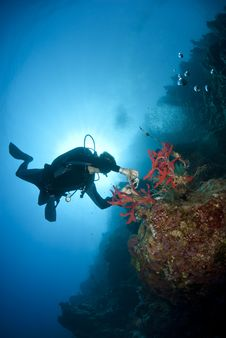 Adult Male Scuba Diver Photograhing Underwater.