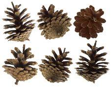 Free Pine Cones Set Royalty Free Stock Image - 16750406