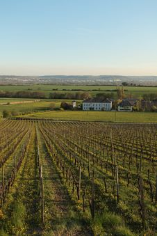 Free Rheingau Vineyard Royalty Free Stock Photos - 16750838