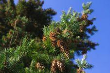 Free Cones Against Blue Sky Stock Photos - 16751493