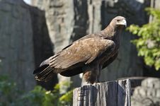 Free An Eagle In China Stock Image - 16754141