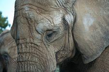Free African Elepants Stock Photos - 16755223