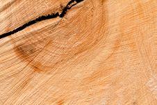 Free Saw Up Tree Texture Royalty Free Stock Photo - 16755875