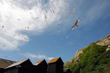 Seagulls Flying Around Fishing Huts, Hastings Royalty Free Stock Images