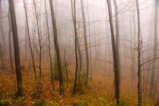 Free Misty Autumn Forest Stock Photography - 16756812