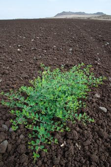 Plant In Tilled Soil Stock Photography